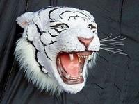 2107 witte tijger kop