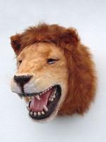 2108 leeuwen kop