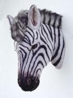 2116 zebra kop
