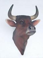 2198 koeie kop